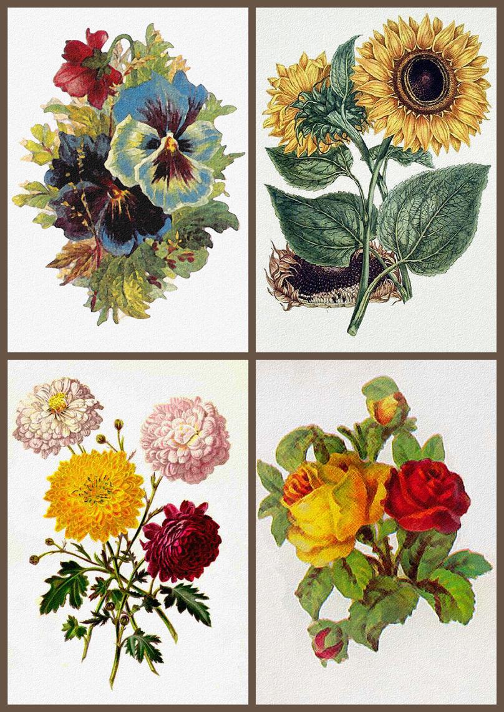 ArtbyJean - Vintage Clip Art: Pansy, Sunflower, Roses, Dahlias