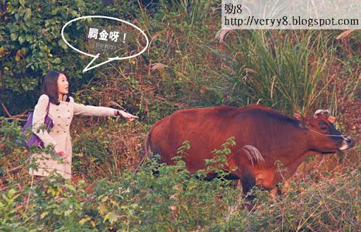 屙金呀!(設計對白) <br><br>牛大哥食飽即屙,差點中招的她嚇到指住大叫:「佢屙屎呀!」