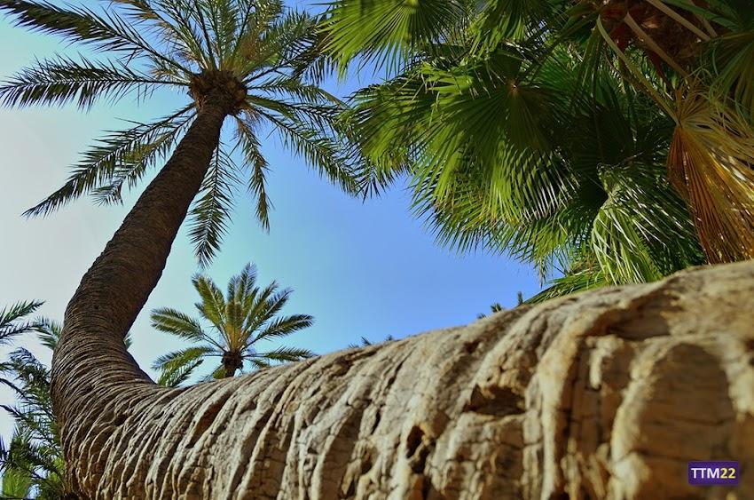 Nikon D5100, 18-55 mm, HDR, Naturaleza, Árboles, Palmeras, Alicante, Parques, Parque El Palmeral