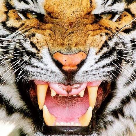Jimmy Tiger