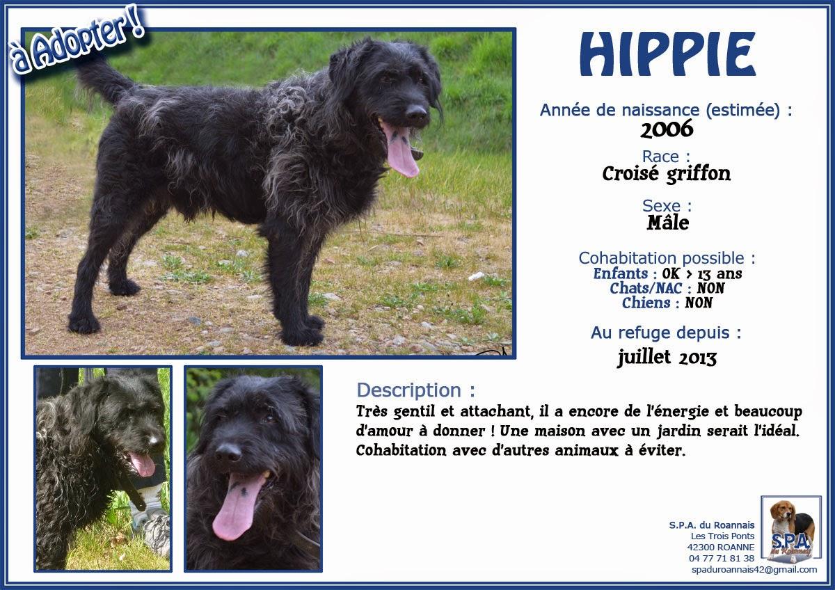 HIPPIE - x griffon 12 ans  (5 ans de refuge) - Spa du Roannais à Roanne (42) Fiche-HIPPIE-2006