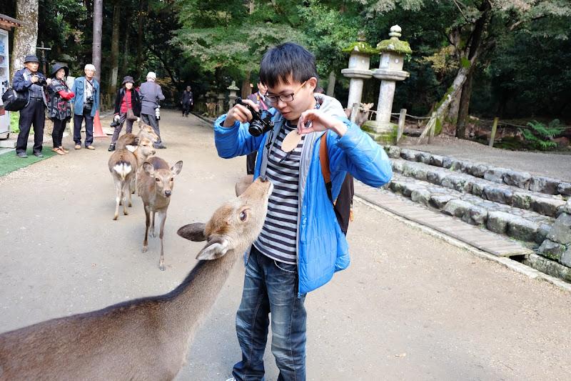 image-奈良與鹿