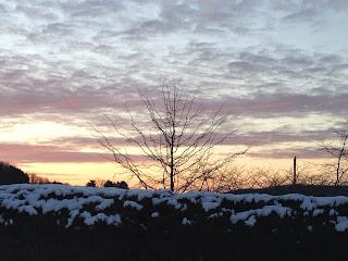 Winter sky and tree