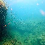 Banc de sardines