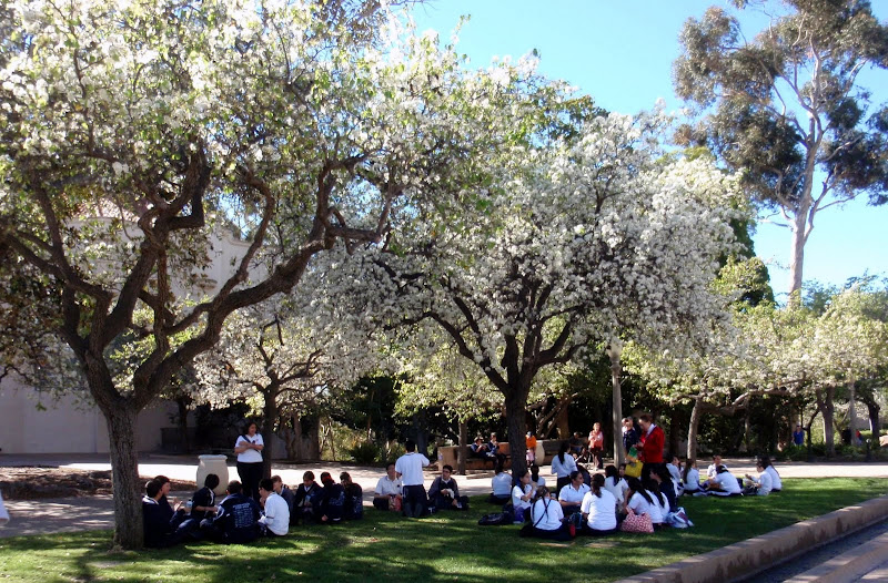 Students meeting under the trees' welcome shade