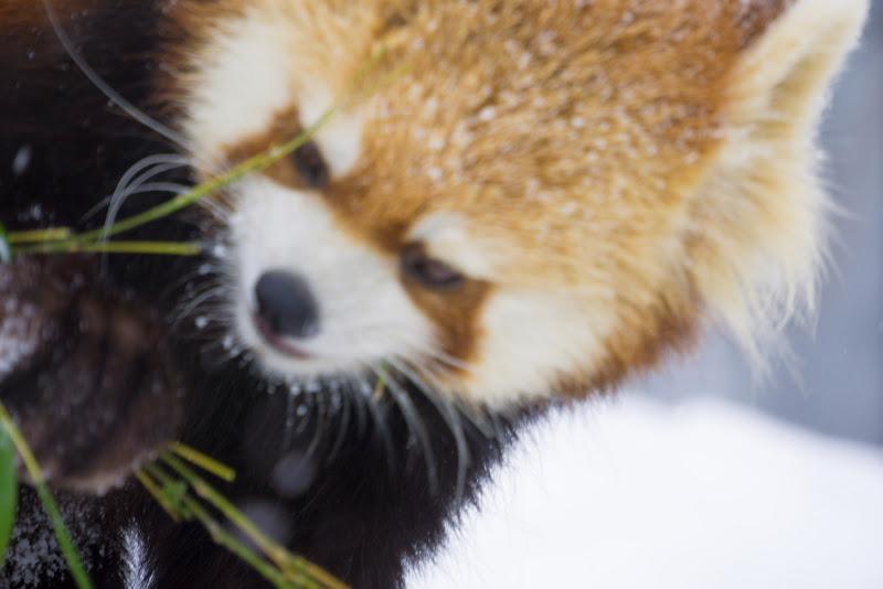 札幌 円山動物園 写真13