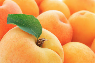 Apricots of Pakistan are exported