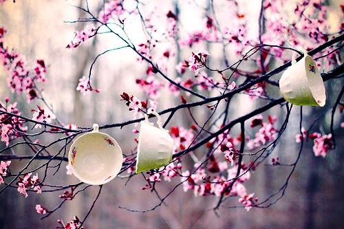 https://lh5.googleusercontent.com/-0MMEWetZ_MY/TY4h_xI7h6I/AAAAAAAAAWc/ldqXREdFO9o/s1600/cherry.blossoms.jpg
