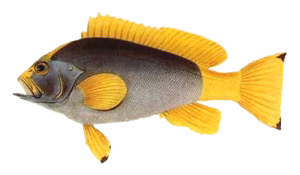 fisk054.png