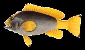 fisk054.png?gl=DK
