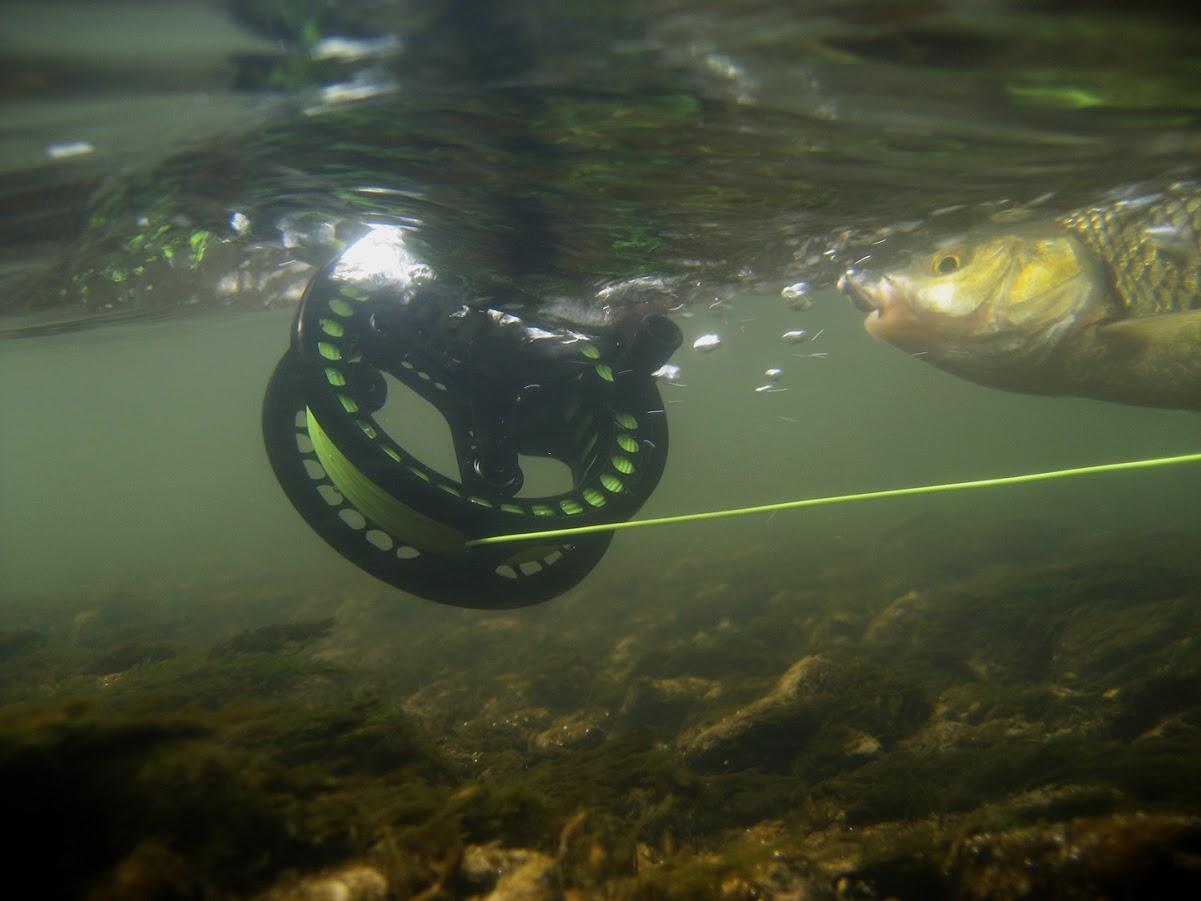 Снимки от река Росица