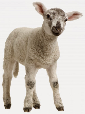 羊年新年祝賀詞 http://word.22ace.com/2015/01/sheep-year-bless-words.html