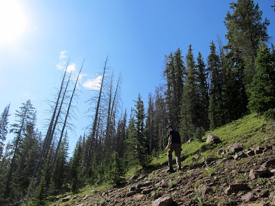 Hiking up East Grandaddy Mountain on Saturday morning