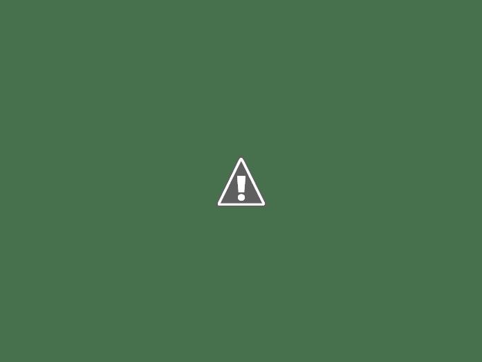 lilija bordovogo cveta posle dozhdja