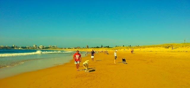 Sydney's Doggie Beach