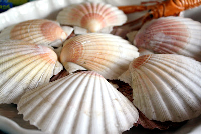Scallop Shells in Rye