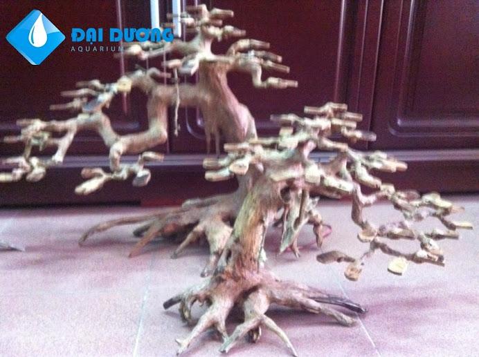 Lũa bonsai hồ cá thủy sinh 3