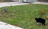 معركة بين كلب وقطة