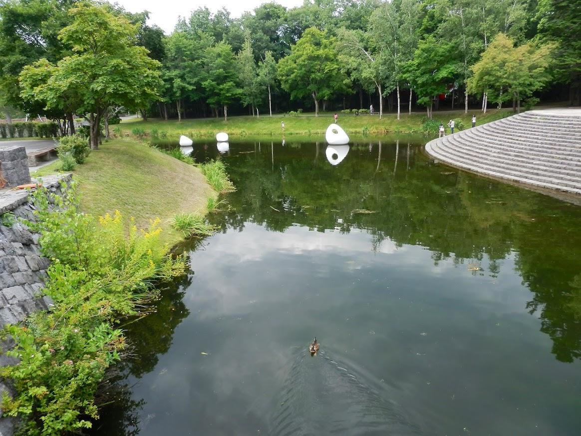 池を泳ぐカモ