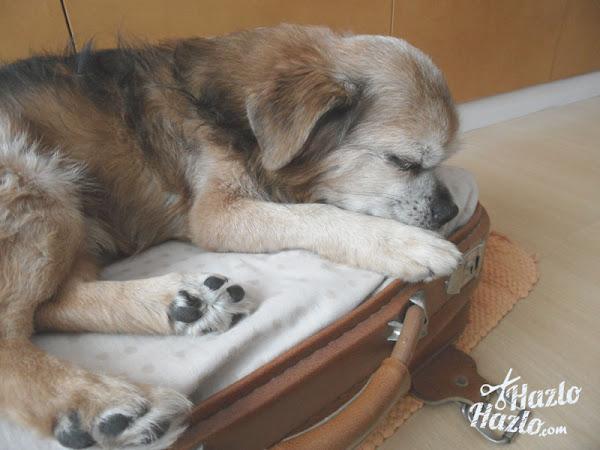 Como hacer cama perro