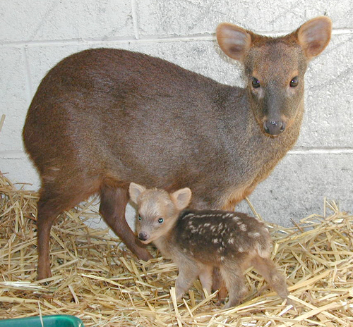 PUDU Facts, Amazing Facts