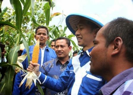 Ibas menyapa para petani jagung di Desa Mengger, Kecamatan Karanganyar, Kabupaten Ngawi