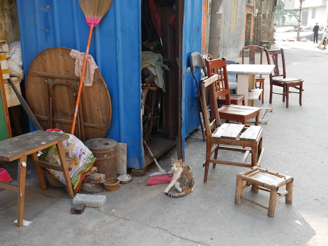cat sitting next to a wooden chair south of Jiaoqiao New Road (滘桥新路) in Yangjiang