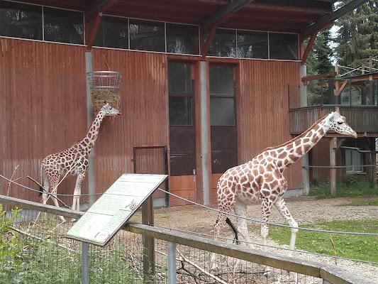 Zoo Schmiding, Schmidinger-Straße 5, Krenglbach, Österreich