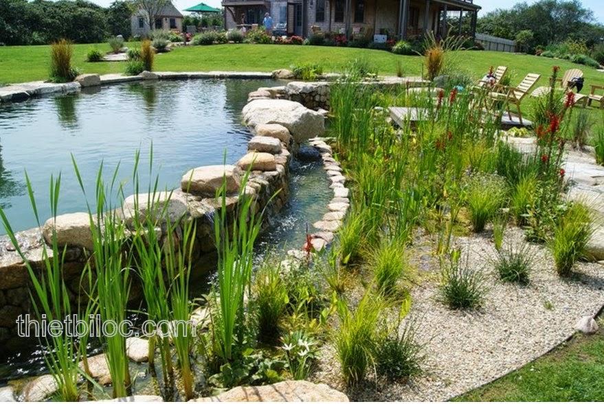 Hồ bơi thiên nhiên