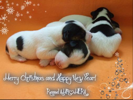 Novoletne čestitke 2012 Pizap.com13245584139191