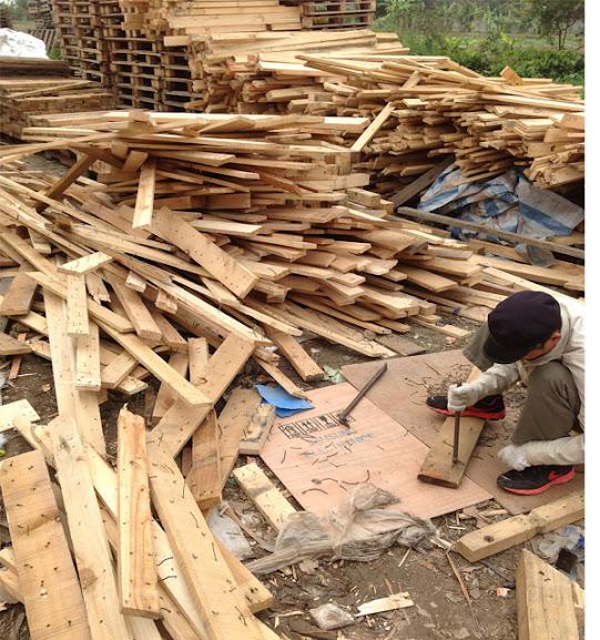 quảng ninh thi nhau về hà nội tìm gỗ thông pallet