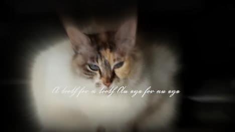 猫の世界のルール