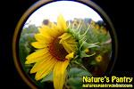 naturespantryonlinecom