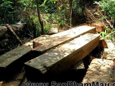 Phát hiện 9 điểm cất giấu gỗ quý trong rừng Bà Nà - Núi Chúa - Xưởng sản xuất đồ gỗ-1