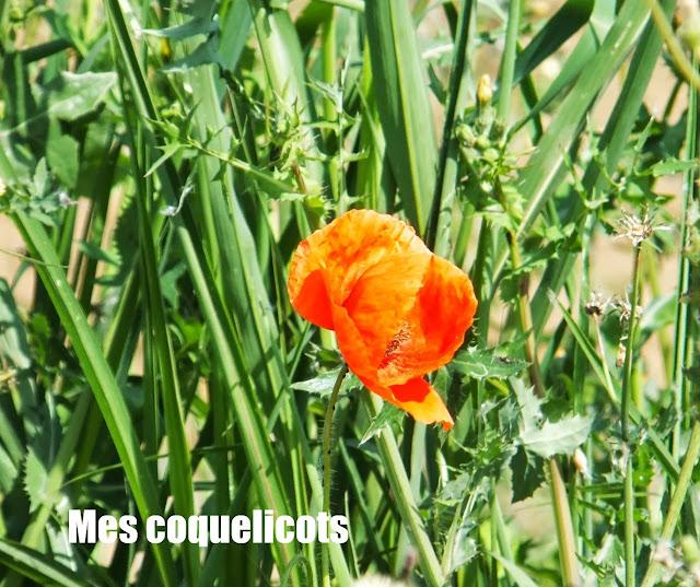 Coquelicots, Amapolas, Francia, Elisa N, Blog de Viajes, Lifestyle, Travel