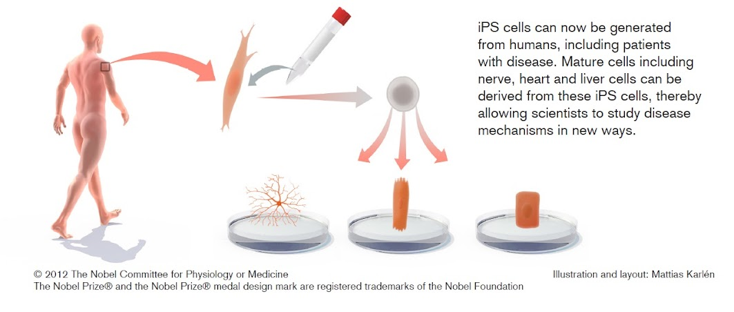 iPS+cell