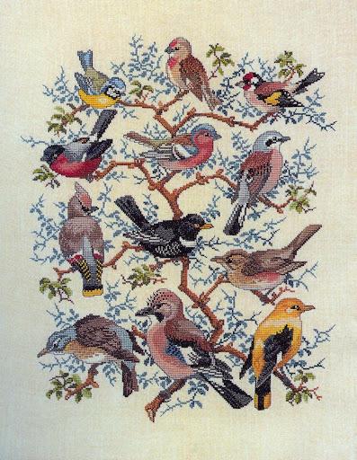 Patrones de aves
