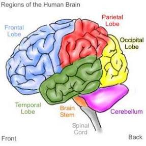 Fakta Isi Otak Pria dan Wanita