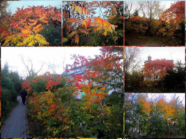 [Obrazek: jesiennnie1.jpg]