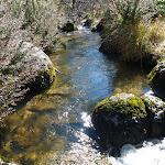 Sawpit Creek (298589)