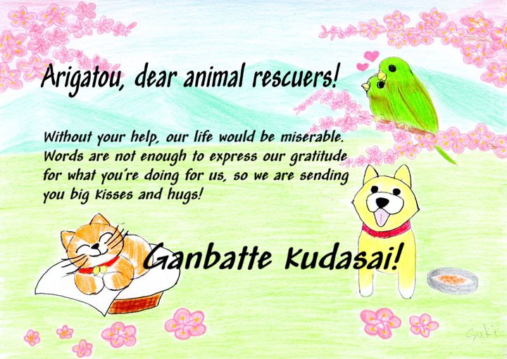 Thank You Japanese Animal Rescues