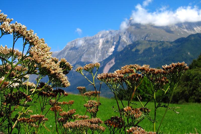 wildflowers and Mt. Krn