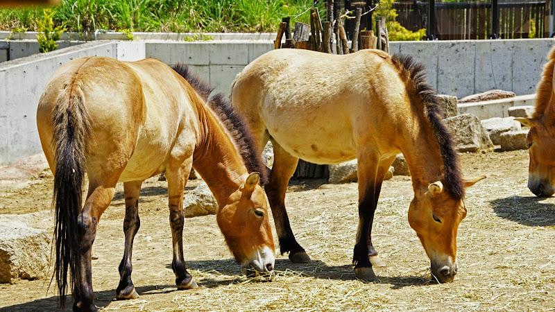 多摩動物公園 馬 写真
