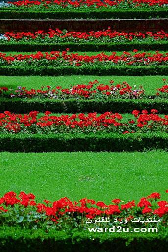 a%2520%252821%2529 بعض الافكار والاذواق والانظمة لتنسيق الحدائق والشرفات والمنازل بالورود