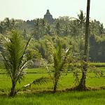 widok na świątynię Borodubur z polnej drogi
