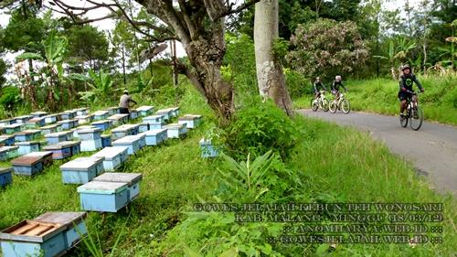 Melewati peternakan lebah yang berada persis di pinggir jalan.