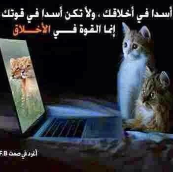 Marwan Al Photo 20