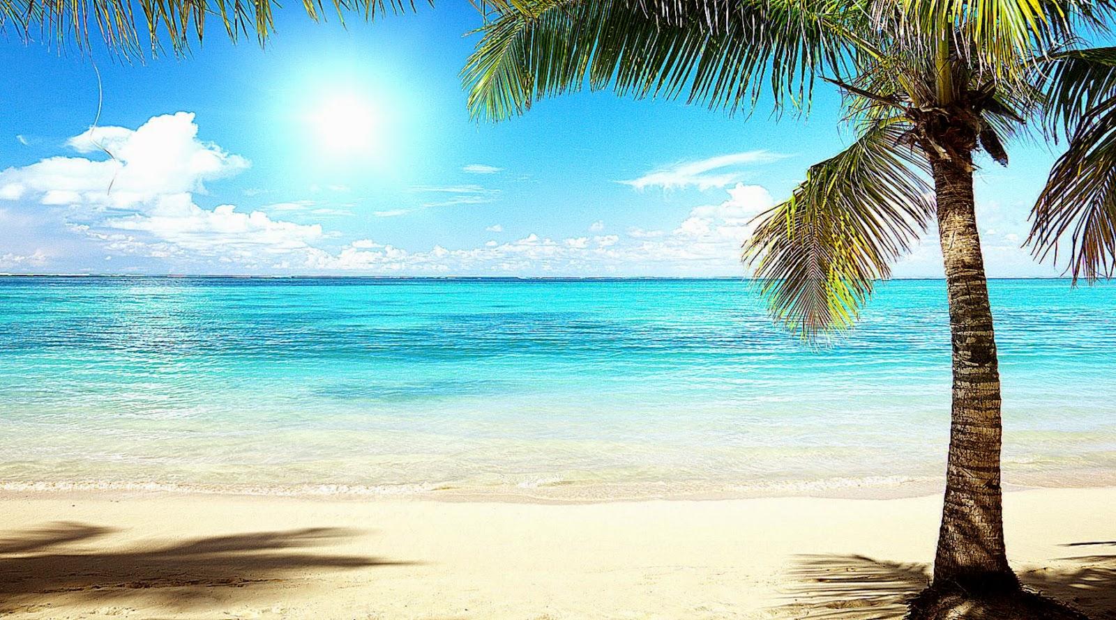 Wallpaper tropics palm beach sea clouds desktop wallpaper