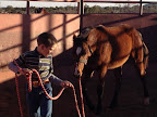 halter breaking 2012 colt