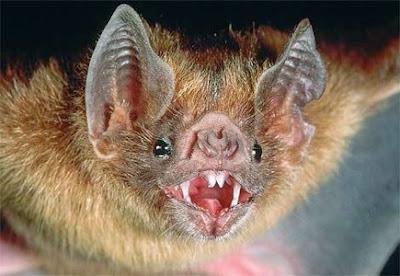 vampire%2Bbat.jpg